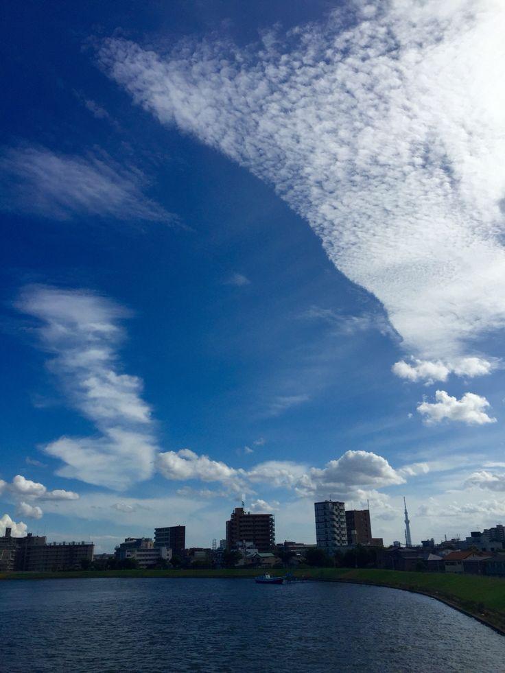 Late Summer afternoon, Nakagawa River, Kameari. 晩夏の中川の午後。