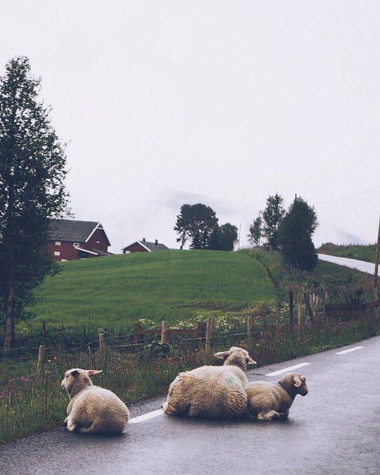 Blogissa just nyt kuvasarja ja vlogi tän kesän toiselta Norjan roadtripiltä! . . . . . . #norway #roadtrippin #moreontgeblog #fashionstatement #vlog #norge #visitnorway