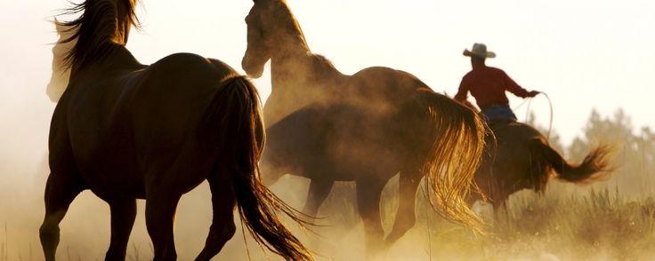 Na vida ou sobre o cavalo, ou você toma as rédeas do controle ou será controlado!  #OSU
