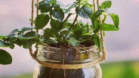 Ezekért az elbűvölő, befőttesüvegbe álmodott kertekért te is oda leszel!