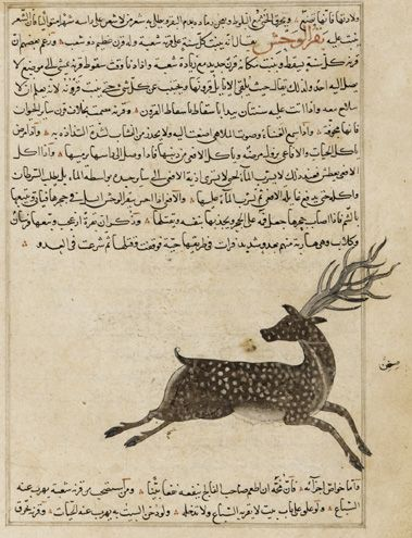 Folio from Aja'ib al-makhluqat (Wonders of Creation) by al-Qazvini;    recto: Manuscript only; verso: Wild Ox (Bagar al-Wahsh)    early 15th century