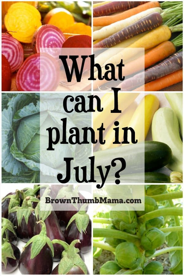 9 Vegetables To Plant In July Zone 9 Planting Vegetables Organic Gardening Tips Growing Vegetables