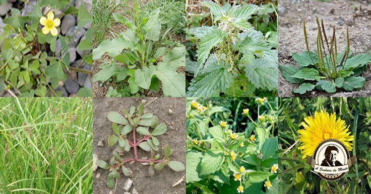 """As plantas indicadoras são muito úteis no seu jardim / horta. Através destas plantas podemos aprender a """"ler"""" o que a Natureza nos está a transmitir."""
