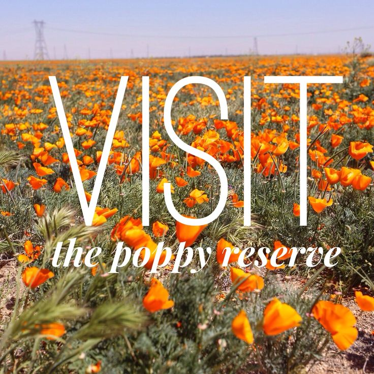 Antelope Valley California Poppy Reserve. Not very many this year, but the small amount there is, is beautiful.
