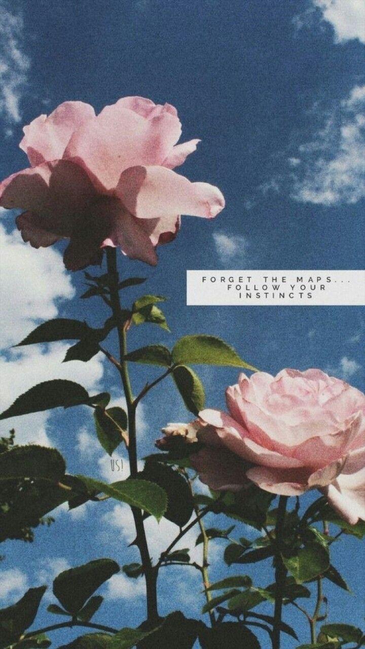 Esqueca Os Mapas Siga Os Seus Instintos Flowers Quotes Tumblr Flower Quotes Wallpaper Quotes