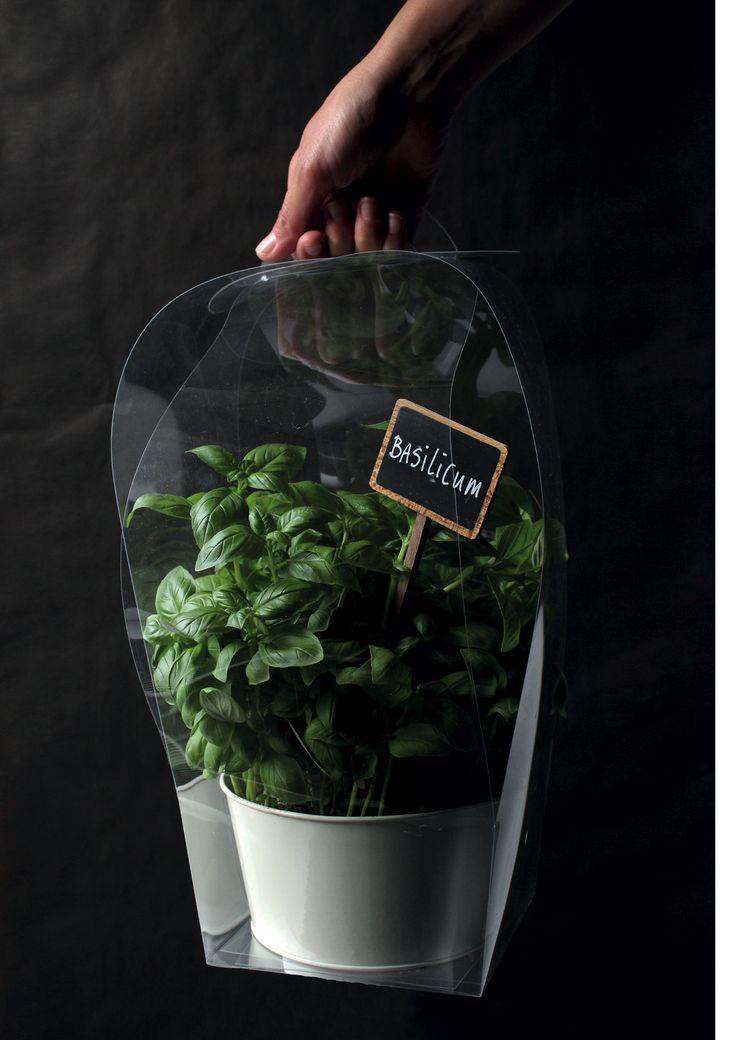 Plant packaging at Broekhof #Broekhof #florist #packaging #plant #flowers