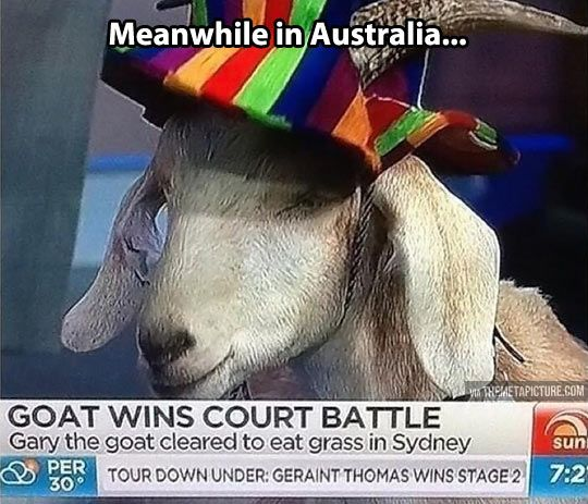 Australia is a weird place… @Hannah Mestel Mestel Baylor THIS! This is why we think these things.....