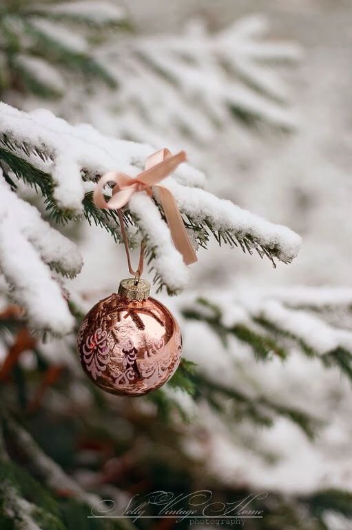 snow + pine
