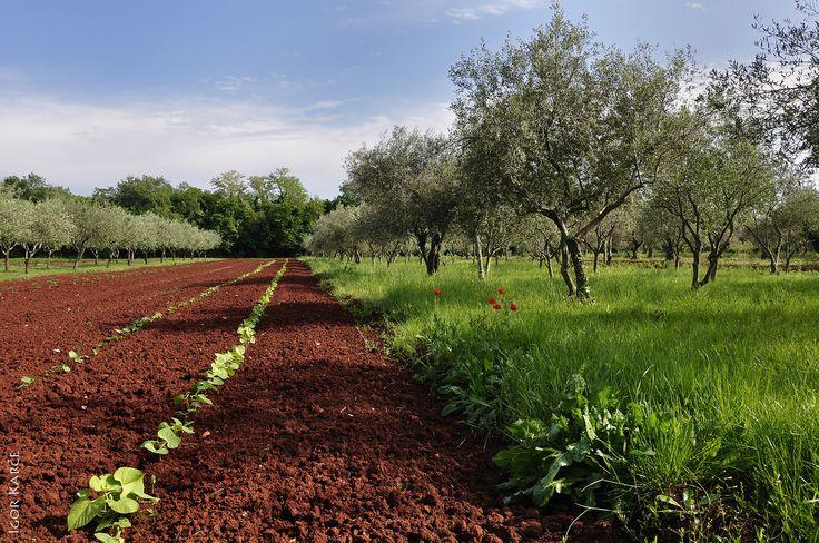 Beautiful Istrian inland....