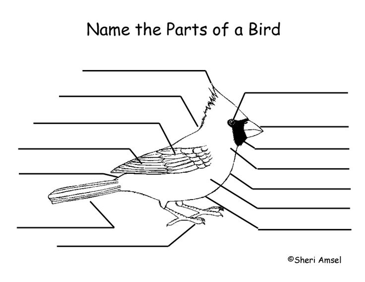 Students Can Color And Label The Parts Of A Bird To Learn