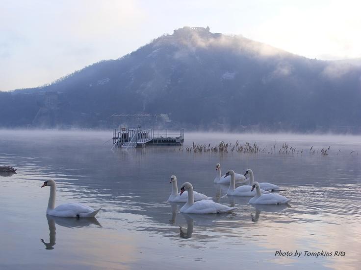 Misty winter morning...