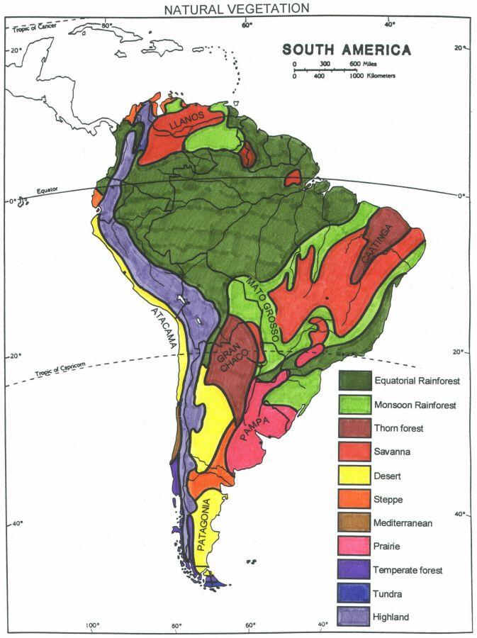 South American Natural Vegetation Latin America Pinterest - Vegetation map of north america