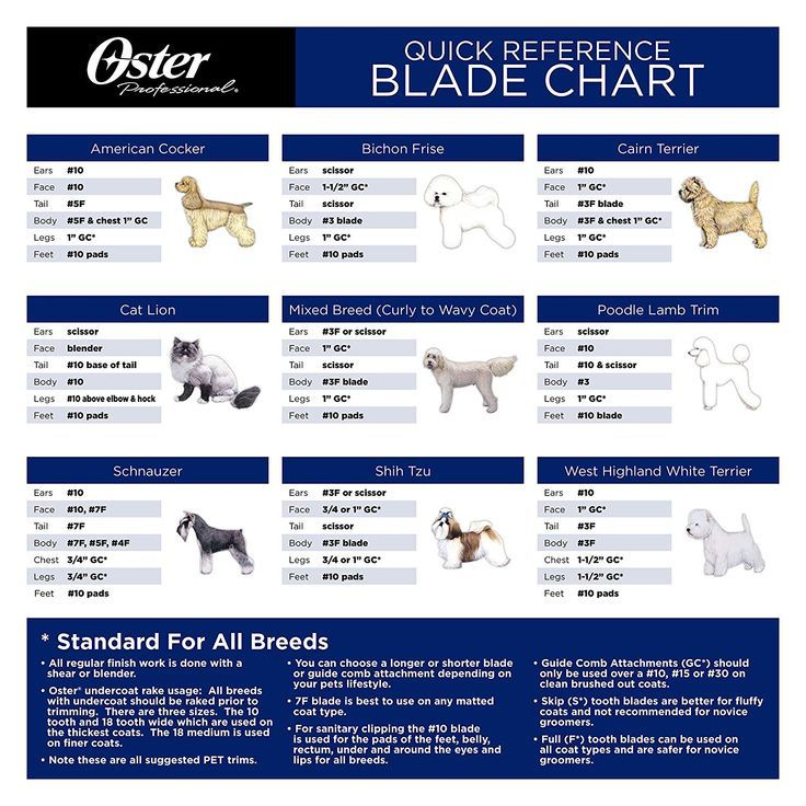 The Best Dog Clippers For Thick Coats Dog Grooming Blades In Reverse Dog Clippers Reviews Gr Dog Grooming Clippers Dog Grooming Styles Schnauzer Grooming