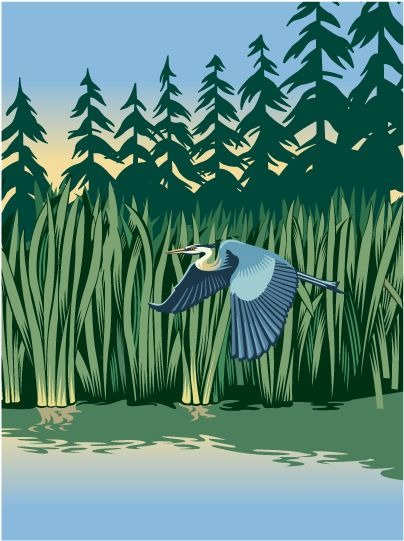 Heron in the Wetlands. Illustration by ©Gary Alphonso. Represented by i2i Art Inc.