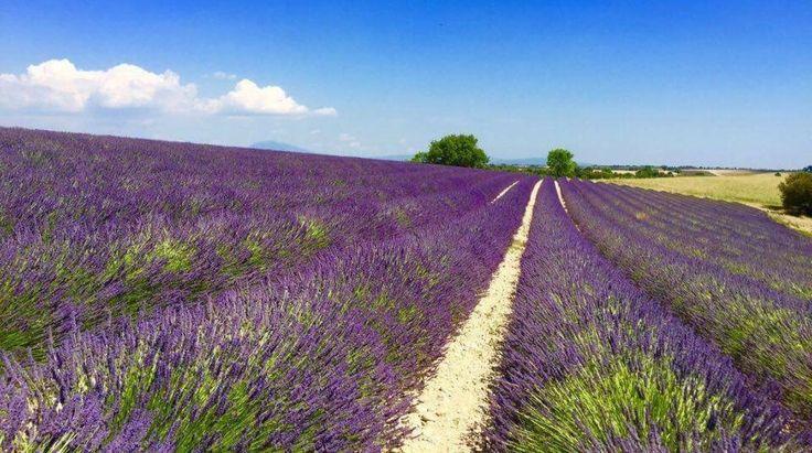 Provence i Frankrike är perfekt för vandring | Allt om Resor