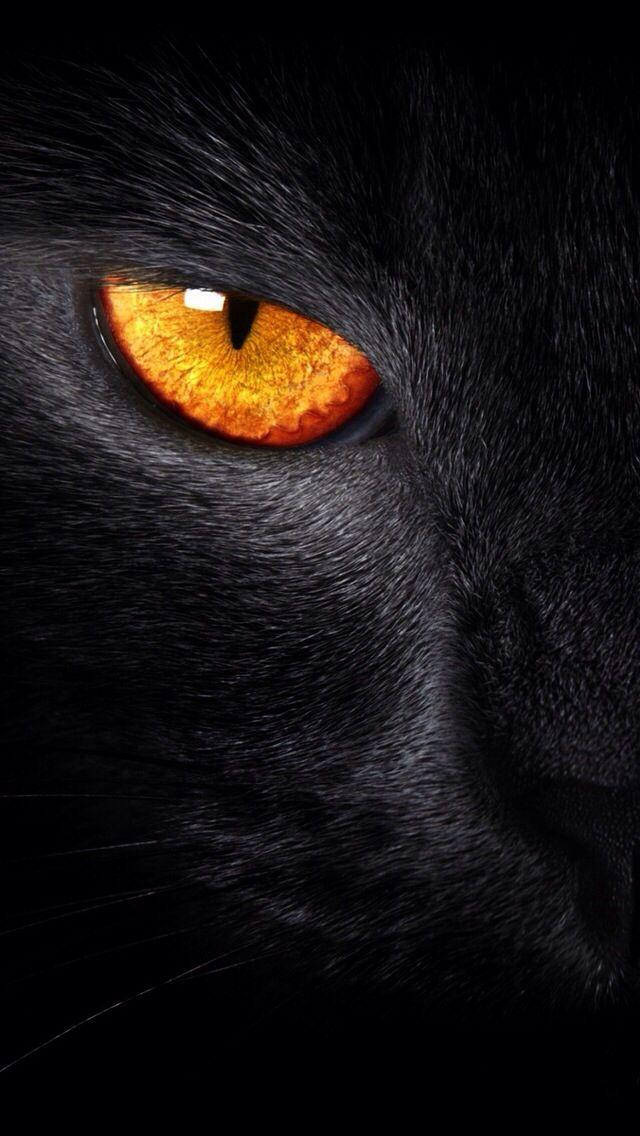 Incroyable regard orange que seul un chat noir peut avoir.