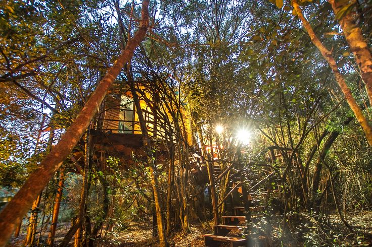 Teniqua Treetops is a nature lovers unique tree house eco resort in the Knysna forest near Sedgefield on the Garden Route