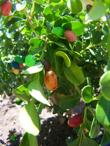 How to Grow a Jelly Bean Tree (Seriously) - What a creative, fun idea for a class or at home!