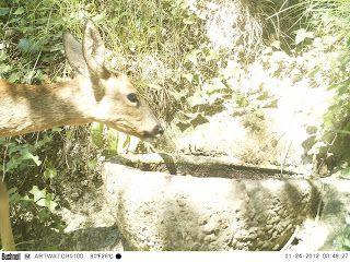 Wild Wood en Provence: roe deer snake and birds