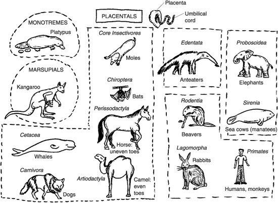 Week 1, Mammals: three types of mammals. More in-depth