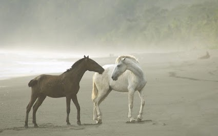 Thomas Eichberger Photo: Plays Time, Costa Rica, Forests Wild, Magnif Hors, Rain Forests, Wonder Beautiful,  Camelus Dromedarius, Hors Photography, Wild Horses