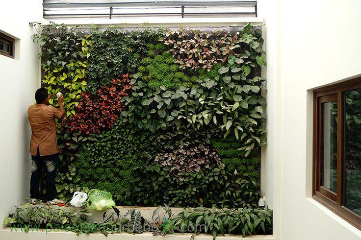 31 best images about jardines verticales en guatemala for Paisajismo vertical
