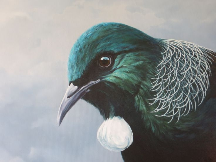 Tui  Oil on canvas  1000x750mm