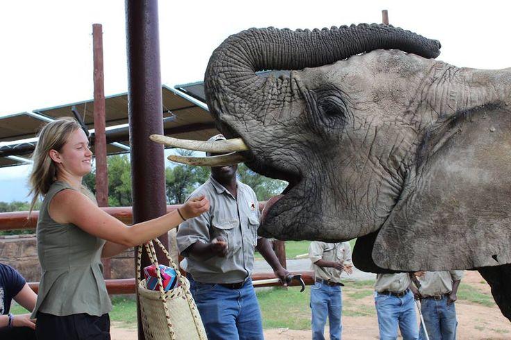 Elephant interaction....