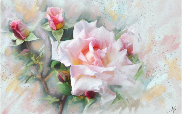 Скачать обои роза, цветок, цветы, нежно, розовая, раздел живопись в разрешении…