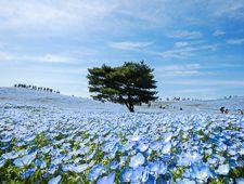 Mito Travel: Kairakuen Garden