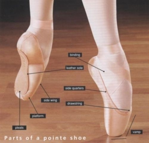Parts Of A Pointe Shoe Diagram Wiring Diagram