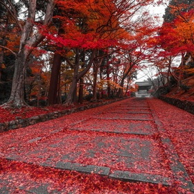 Red #fotografia #foto #paisajes