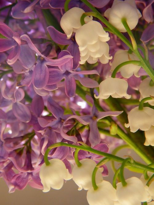 lilac and lilly of the valley: