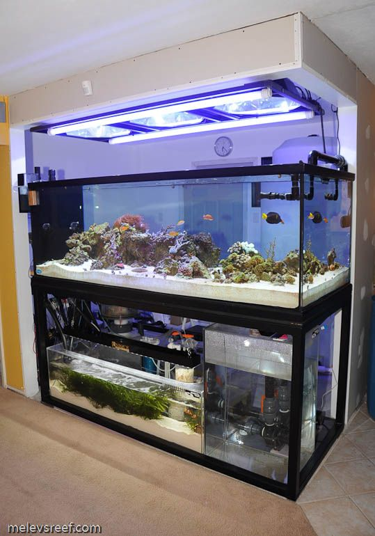 Reef addicts tank stands wood versus steel aquariums for Custom fish tank stand