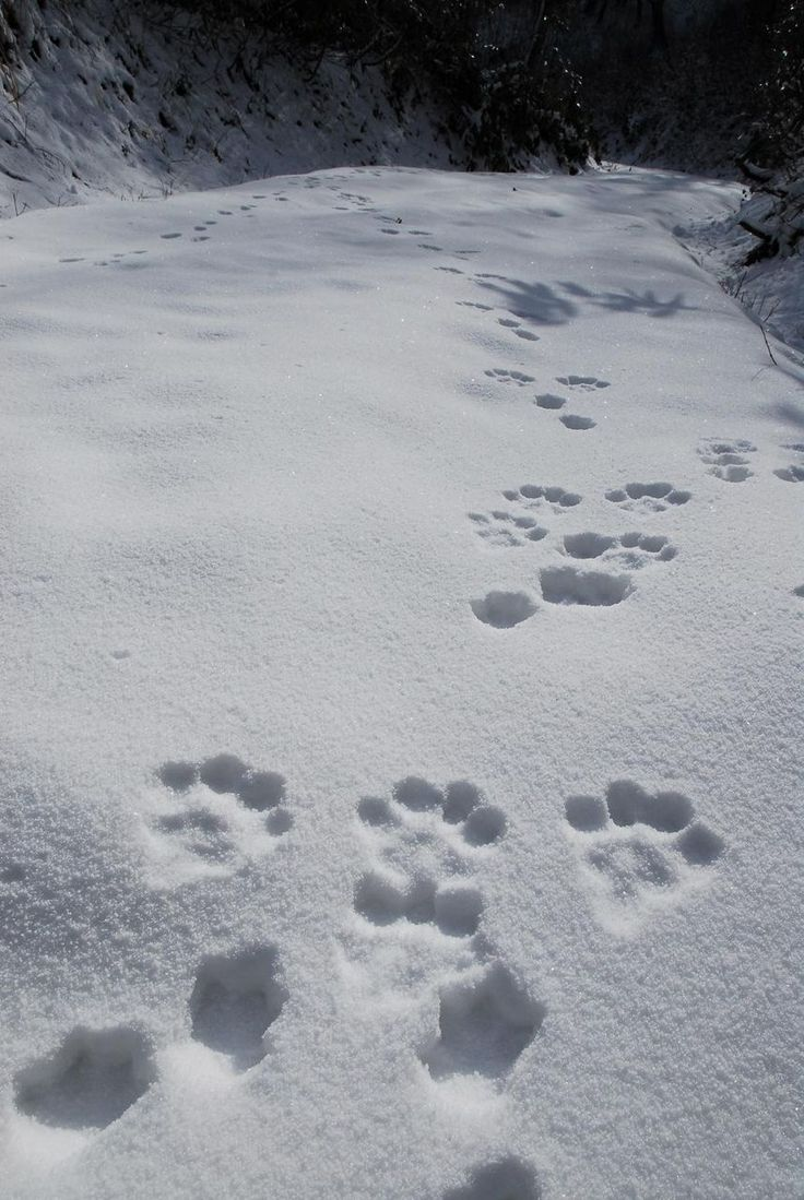I'm still waiting to see Abby and Buddy's footprints in the snow!!!! Come in SNOW!!!