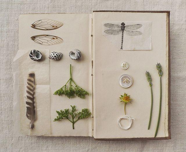 Wild Pages Press Journals & Notebooks