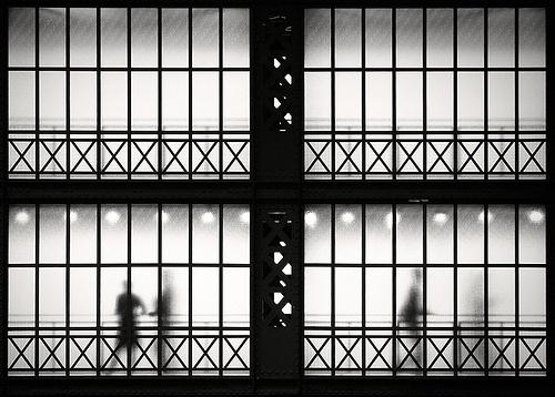 shadows in the trap   Flickr - Marek Niewiadomski