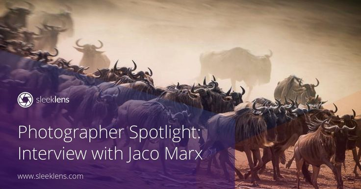 Time for another photographer spotlight interview! Jaco Marx is a wildlife photographer from Africa. Get to know all his tips and tricks!