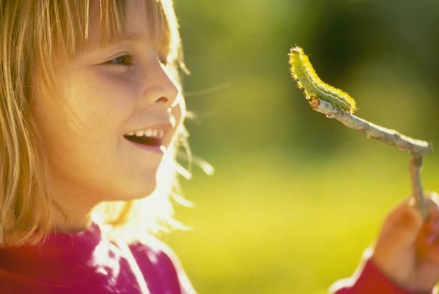 How much do you really know about caterpillars? Here are 10 cool facts about caterpillars.