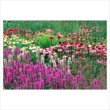 Summer border with Stachys moniere 'Hummelo', Echinacea 'Rubinglow, Echinacea 'Green Edge'and Molinia 'Paul Petersen' RHS Gardens Wisley in Surrey, July