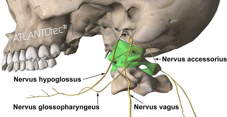 nervo accessorio, nervo glossofaringeo, nervo vago, nervo ipoglosso e disallineamento dell'Atlante