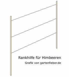 25+ Best Ideas About Himbeeren Pflege On Pinterest | Himbeere Haar ... Brombeeren Pflanzen Und Schneiden Pflegetipps Fur Hobby Gartner