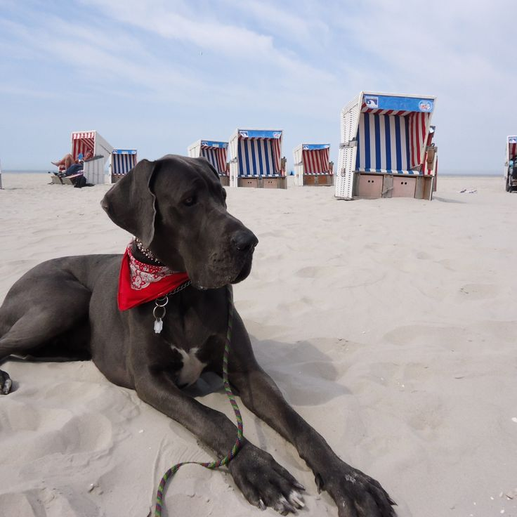 Hunderegeln - Beach Motel St. Peter Ording