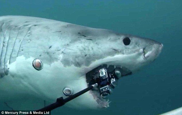 A great white shark tears into over $12,000 of camera equipment off the coast of New Zeala...