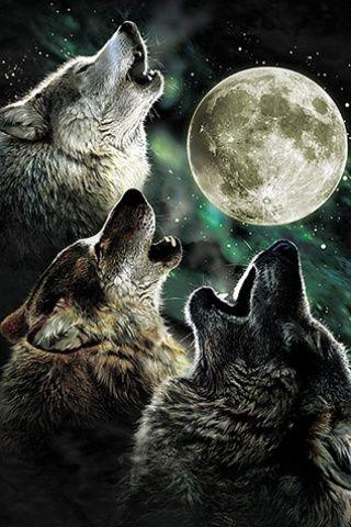 Para aquellos amantes a los lobos..