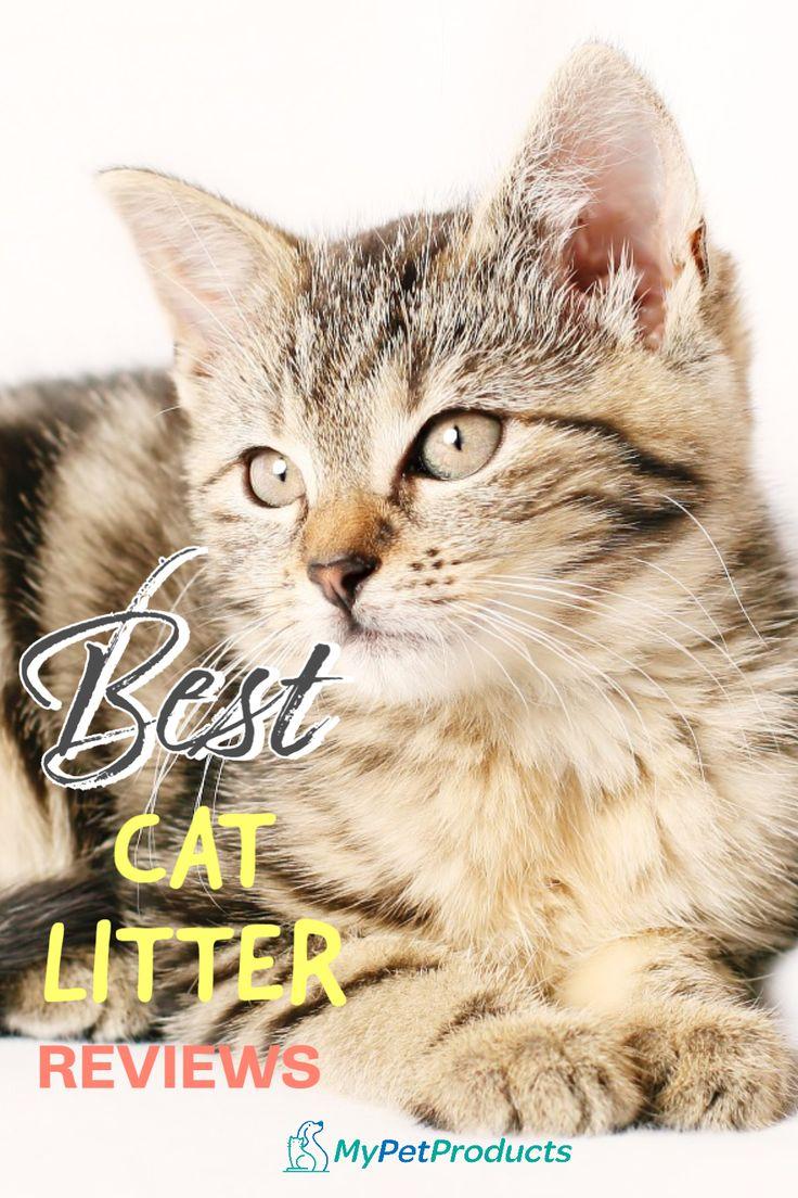 Best Cat Litter Reviews in 2020 Cats, Cool cats, Best