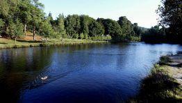 El lago de Castiñeiras, de origen artificial y creado en los años 50, se encuentra entre los municipios de Vilaboa y Marín. En sus orillas anidan especies de patos salvajes y hacen escala aves migratorias FOTÓGRAFO: JAIME OLMEDO