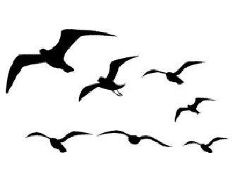 flying_birds – Etsy