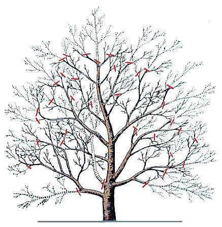 """""""Северный сад"""" дизайн сада, выращивани деревье"""