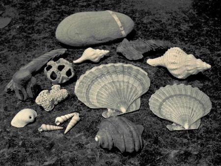 Fossils from Calvert Cliffs | Chesapeake Bay | Pinterest | Bays ...